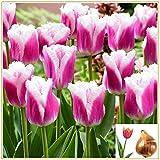 Tulpenzwiebeln-Innenhof Dekoration Anmutige Bonsai Greenleaf Süße exotische Blumen,Mischfarbenblumen-4,5 Zwiebeln