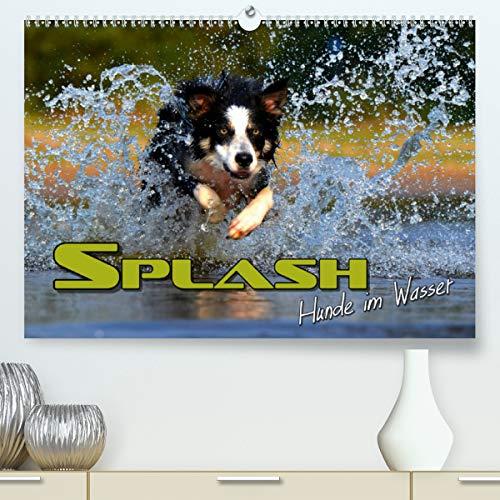 SPLASH - Hunde im Wasser (hochwertiger DIN A2 Wandkalender 2021, Kunstdruck in Hochglanz)