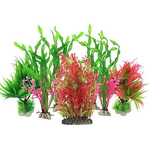 décoration aquarium plantes