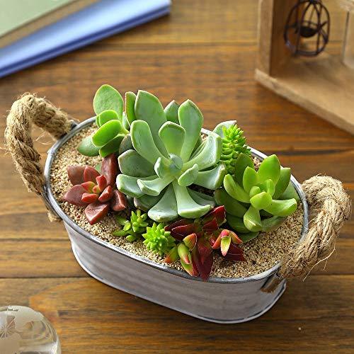 多肉植物「ポップアリーナ」【おまかせ アソート 寄せ植え 鉢 インテリア ギフト プレゼント 観葉植物】