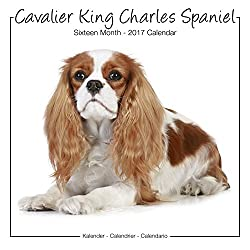 Cavalier King Charles Studio Calendar 2017[Avonside Publishing Ltd.]