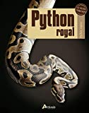 Python royal : Python regius