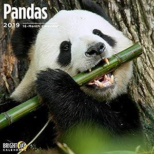 Pandas 2019 16 Month Wall Calendar 12 x 12 Inches