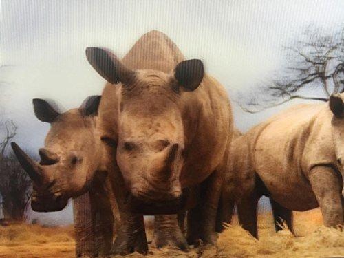 3D Postkarte Wackelbild Nashörner in der afrikanischen savanne