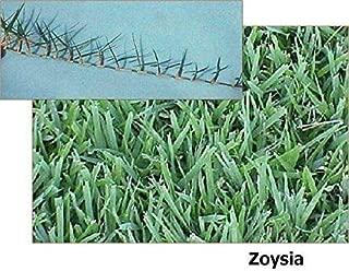 el toro grass seed