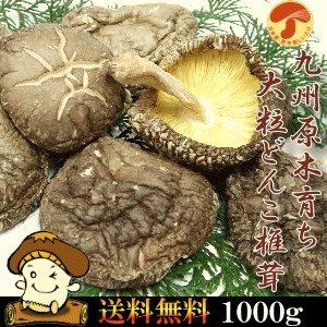 九州産原木大粒干しどんこしいたけ1000g 国産椎茸 無農薬原木栽培