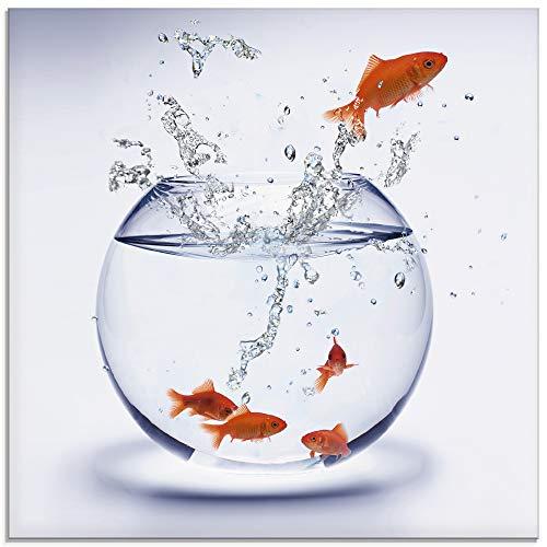 Artland Glasbilder Wandbild Glas Bild einteilig 30x30 cm Quadratisch Tiere Fische Goldfisch Aquarium Wasser T5XF