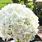 enova-home-artificial-silk-hydrangea-flower-arrangement-in-clear-glass-vase-with-faux-water-for-home-wedding-decoration-cream