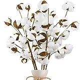 Coceca 5pcs 23' Cotton Stems 10 Cotton Heads, Fake Cotton Flowers, Cotton Plant Decor for Farmhous Decoration