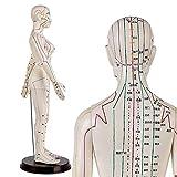 LBYLYH 60 cm Modelo de Mujer Acupuntura - Medicina Acupunctur Modelo - Modelo Humano Acupuntura - para Cuerpo Herborist Figurine Doctor Doctor Acupuntura Acupuntura y Meridianos claros