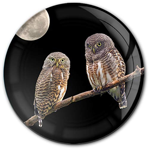 metALUm runder Acrylmagnet mit starkem Neodym - Magnet Eulen | Raubtiere | Wildvögel #1301181