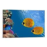 33 Póster de viaje para acuario de 50 x 75 cm