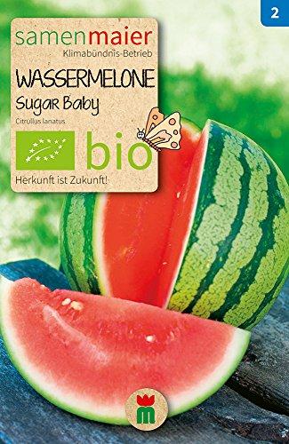 Samen Maier 825 Wassermelone Sugar Baby (Bio-Wassermelonensamen)