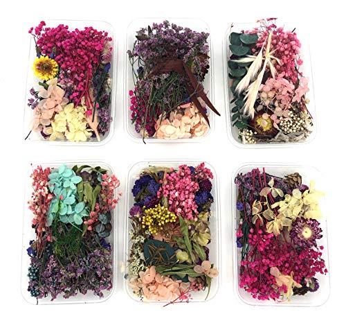 Echte, natürliche getrocknete Blumen für Epoxidharz & für Harz Schmuck zum Basteln und als Wohndekoration
