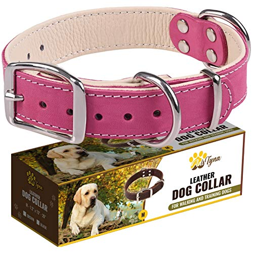 Padded Leather Dog Collar – Girl Dog Collars – Pink Dog Collars for Medium Female Dogs