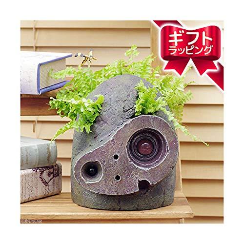 (観葉植物)観葉ギフト ジブリプランター 天空の城ラピュタ ロボット兵の思い ネフロレピス ツデー仕立て 植え込み完成品