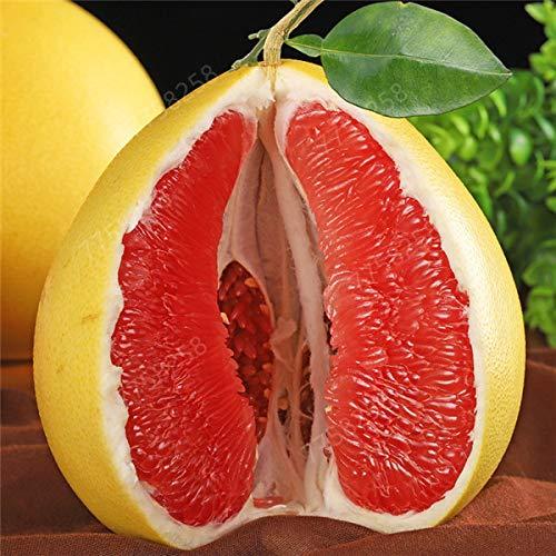 GETSO 5pcs de Sac Hardy Mini Pummello Pomelo Arbre Nain kao Pan Pamplemousse! Plante Rare Bonsai Fruit pour la Livraison Gratuite de Jardin à Domicile: 8