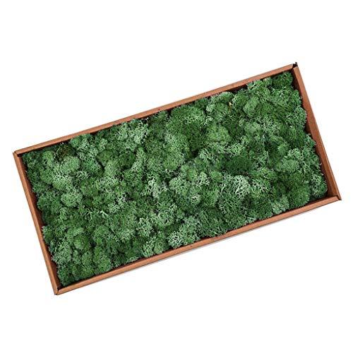 LOVIVER Musgo De Reno Preservado Artificial para Terrarios Jardines De Hadas Artes Y Manualidades 20 Colores - Verde Oscuro