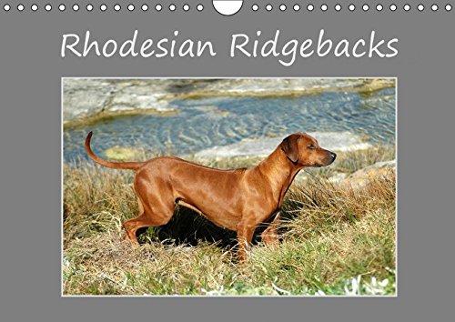Rhodesian Ridgebacks (Wandkalender 2017 DIN A4 quer): Ein hochqualitativer Foto-Kalender der Hunderasse