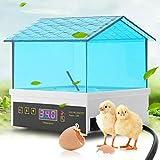 GRASSAIR Incubatrice per Uova, Mini Digital Egg Hatcher, Tratteggio per Controllo Temperatura a 4 Uova per Chickens Ducks Birds Fagiano Quaglia
