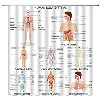 Human Body System Shower Curtain Different Organ Chart Body Structures Cell Life Anatomy Organ Illustration Medical Polyester Cloth Fabric Bathroom Curtains Decor Set with Hooks,60 x 70 Inches
