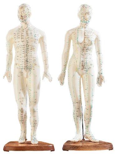newgen medicals Akupunktur Modell: Akupunktur-Figuren 2er-Set (Mann/Frau) (Akupunktur Model)