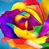 TOYHEART 200 Piezas De Semillas De Flores Premium, Semillas De Rosas Arcoíris, Cultivos Decorativos De Crecimiento Rápido, Semillas De Plantas De Colores Brillantes para Jardín Multi
