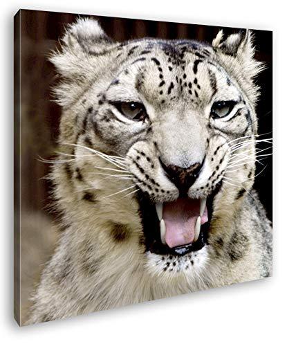 deyoli bedrohlich knurrender Schneeleopard Format: 40x40 als Leinwandbild, Motiv fertig gerahmt auf Echtholzrahmen, Hochwertiger Digitaldruck mit Rahmen, Kein Poster oder...