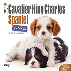 Cavalier King Charles Spaniel Puppies 2016 Calendar (多言語) カレンダー[Browntrout Publishers/Amazon]