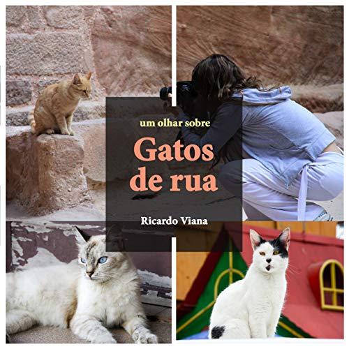 Gatos de rua: Um olhar sobre