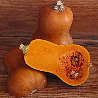 Squash (Winter) Seeds - Honeynut - Packet, Vegetable Seeds