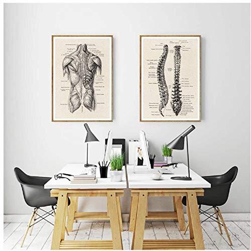 DLFALG Obra de anatomía humana Imagen médica de la pared Esqueleto muscular Póster Vintage Impresión en lienzo nórdico Pintura educativa Decoración moderna-40x50cmx2 Sin marco