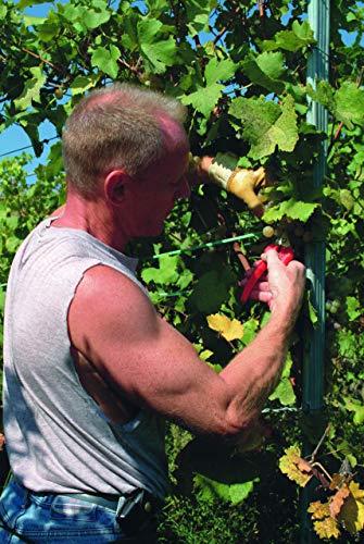 Felco Pruning Shears (F 310) - High Performance One-Hand Garden Pruners - F-310