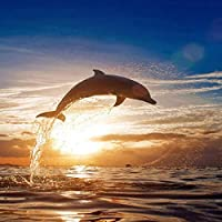 JXRDG DIY 5D Diamond Painting Kits Dolphin, Full Square Drill Embroidery Cross Stitch Art Crafts For Home Wall Decor Christmas Gift 40x40cm no frame