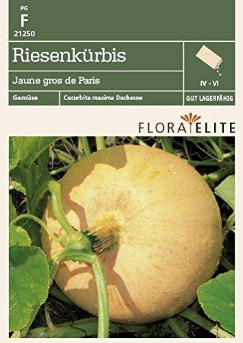 Flora Elite 21250 Riesenkürbis Jaune gros de Paris (Kürbissamen)