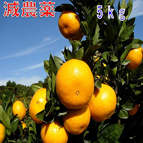 和歌山産 減農薬 みかん 約5kg 2S〜Lサイズ混合 ミカン 蜜柑 産地直送