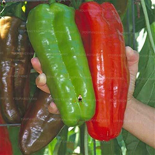 Shopvise 50Pcs / Sac extrêmement doux Piment légumes bio Paprika Chili Graines jardin: multicolore