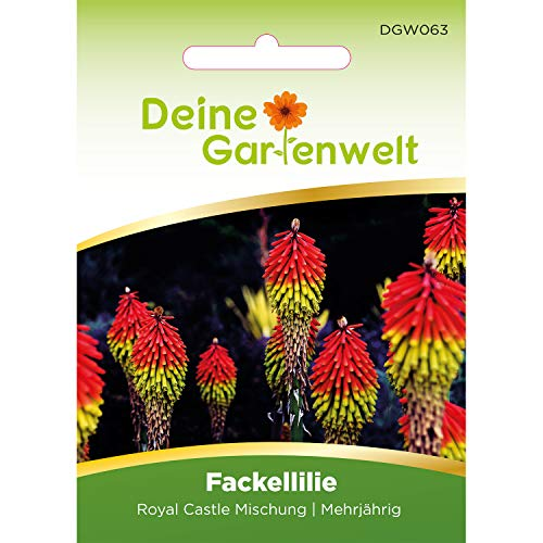 Fackellilie Samen | Fackelliliensamen | Raketenblumen | Raketenblumensamen | Kniphofia | winterhart