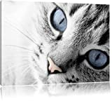 beaux yeux de chat noir / blanc Taille: 60x40 sur toile, énorme XXL Photos complètement encadrées avec civière, art impression sur murale avec cadre, moins cher que la peinture ou la peinture à l'huile, aucune affiche ou un poster