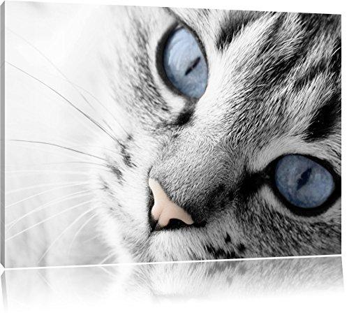 beaux yeux de chat noir / blanc Taille: 100x70 sur toile, énorme XXL Photos complètement encadrées avec civière, art impression sur murale avec cadre, moins cher que la peinture ou la peinture à l'huile, aucune affiche ou un poster