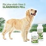 AniForte Brewer's Yeast Tabs 250 pcs - produit naturel pour les chiens, poil brillant et fort, peau vitale, renforcement général et promotion de la condition, stimulation de l'appétit #2