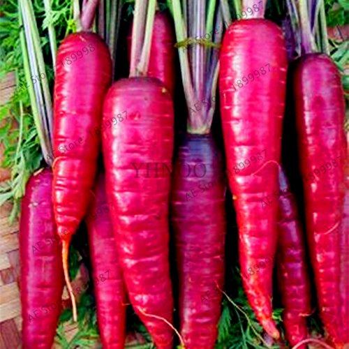 100pcs/sac de graines de carotte, espèces multiplae, graines de légumes biologiques Heirloom russe, taux élevé bourgeonnement, plante pour la maison et le jardin 1