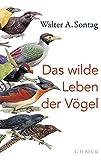 Das wilde Leben der Vögel: Von Nachtschwärmern, Kuckuckskindern und leidenschaftlichen Sängern