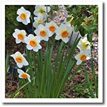 Best white daffodil photography Reviews