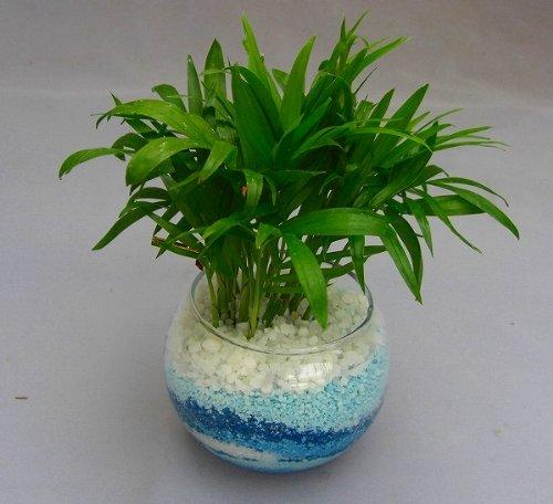 ハイドロカルチャー観葉植物(カラーサンド)(ブルー)2鉢セット バブ10 カラーサンドの観葉植物は、手作りだから世界にひとつだけの模様です。いろいろな場所に飾って楽しめます。また贈り物にも最適です。