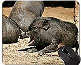 Baby-Schwein-Mausunterlage-Matte, Miniaturschwein-Mausunterlage-Matte