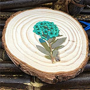 Silk Flower Arrangements Artificial and Dried Flower Dried Pressed Flowers Narcissus On Stem Party Decorative Material 1 Lot / 50 Pcs - ( Color: Blue )