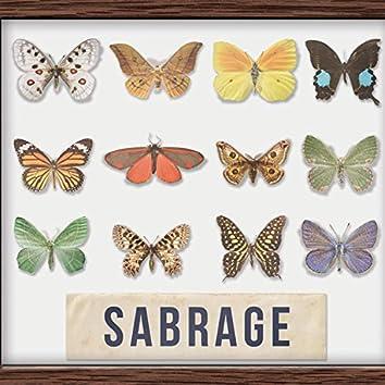 Sbírka motýlů