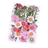 Daimay 35 Stück Gepresste Blumen Gemischte Getrocknete Blätter Echte Trockenpresse Mischte...