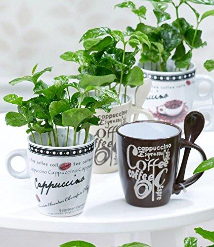 BALDUR Garten Coffea Arabica mit Kaffeetasse, 1 Set Zimmerpflanze